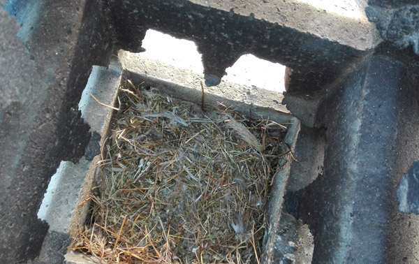 Un nido ostruisce l'impianto